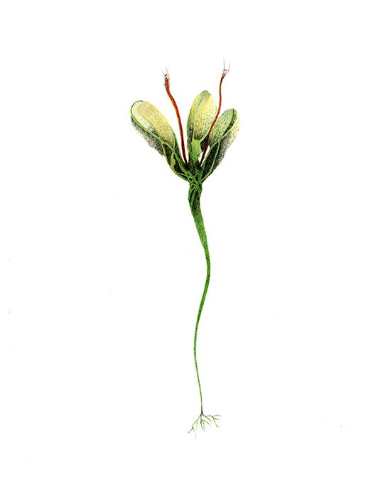fleur cactus copie