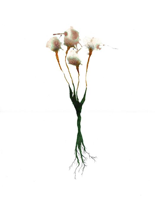 fleur coton_copie2