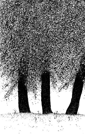 trois troncs